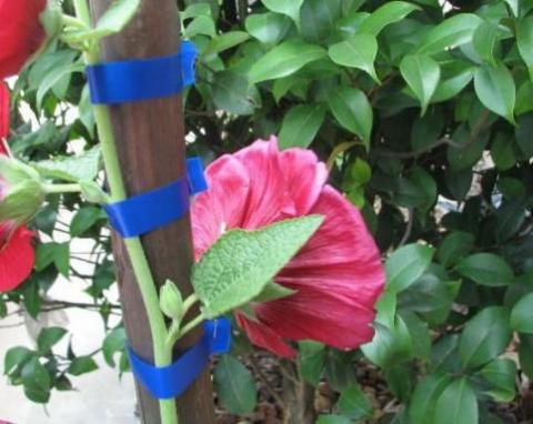 Как красиво подвязать цветы