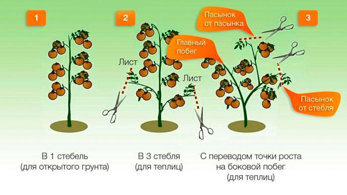 Подвязка и формирование томатов